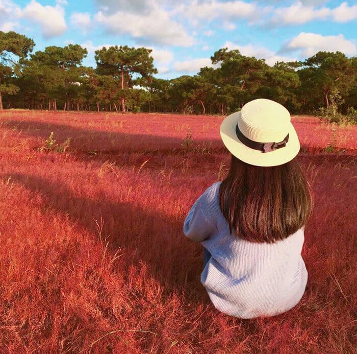 Nếu muốn ngắm cỏ hồng bạn không cần phải đến Bắc Mỹ xa xôi mà giờ đây ngay tại Đà Lạt cũng đã có cỏ hồng.