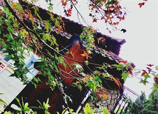 Đà Lạt mùa lá phong.