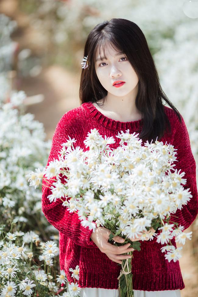 """Từ khi cúc họa mi - loài hoa """"báo đông"""" nở rộ, dân mạng đã được ngắm nhìn bao cô gái xúng xính váy áo, tạo dáng xinh đẹp bên loài hoa này."""