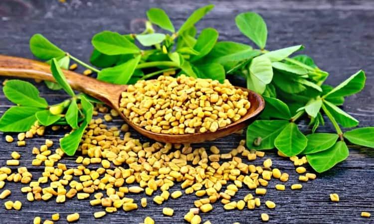 Thảo mộc cỏ cà ri giúp giảm cân